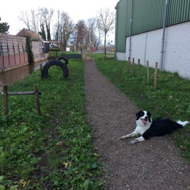 2018: Hondenuitlaatplaats Stompwijk